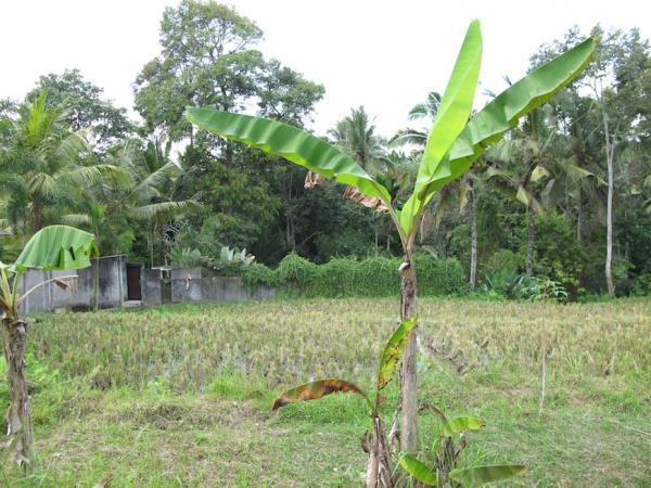 Land view #1