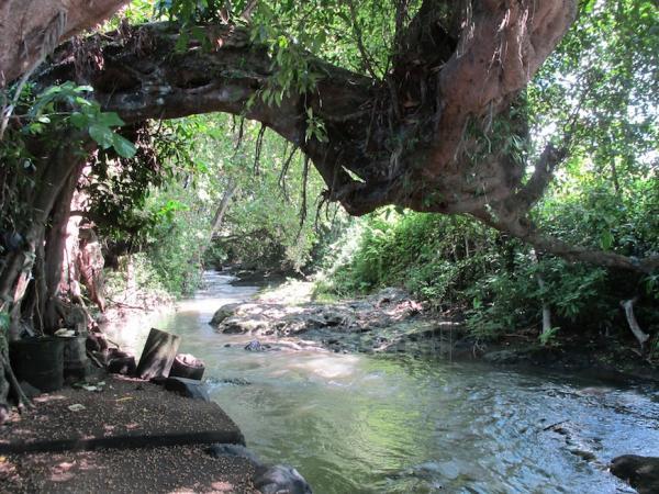 Magnificent river front land