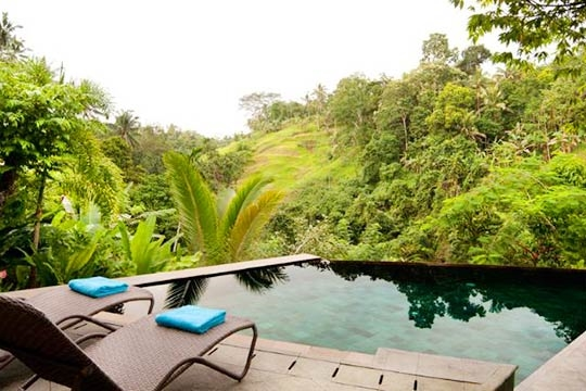 Pool and Jungle View