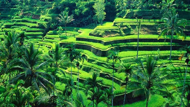 Land For Sale Bali Intouch Realty